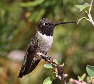 Ornithologie – Introduction à… – Nouveau cours